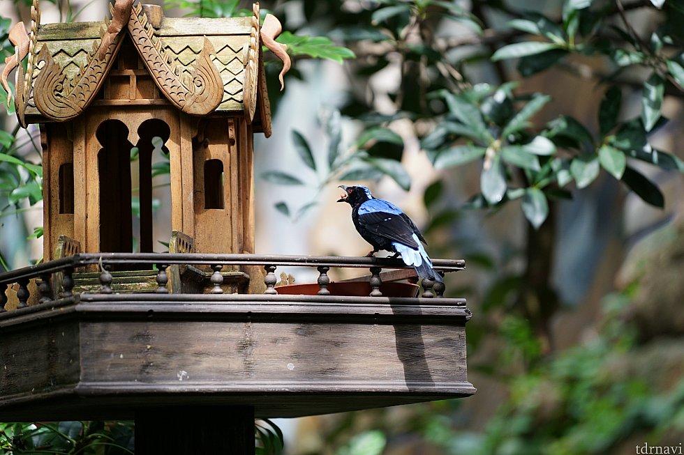 美しい鳥がたくさんいます。