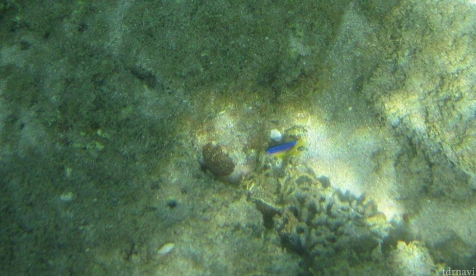 ほんの少し、珊瑚もあった!