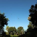 朝空を見上げると気球がたくさん飛んでいました!近くで乗れるんでしょうか?