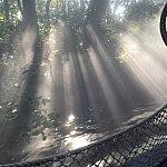 木の間から朝日が差し込んで、霧の中をキラキラ輝いていてとても幻想的でした✨