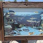 シャーク・リーフに棲む魚たち