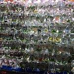 モンコックには熱帯魚屋さんが集中している地域もあります。熱帯魚の販売方法が斬新…!
