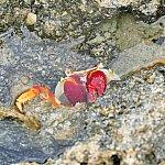 海の中には様々な生き物が!あいにく水中カメラが不調だったので、岩壁のカニの写真です(笑)シュノーケルをすれば色とりどりの魚と泳ぐことができますよ♪