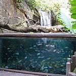 熱帯魚?の水槽もあります