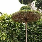 ティンクの世界に近付いてるから?キノコのようなカタチの木です☆