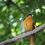 とても特徴ある鳴き声の鳥