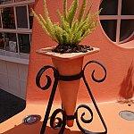 植木鉢もコーン。