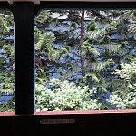 茂みビュー…