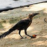 こちらの鳥は何かの実を食べてました!
