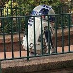 R2が止まってこちらに向かっておしゃべり(*^^*)