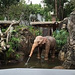最後に会える子ゾウ。可愛すぎる・・・連れて帰りたい・・・