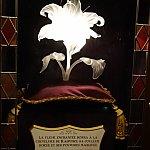ラプンツェル 魔法の花