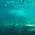 水中の体を両方同時に見る事が出来ます。