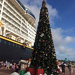 クリスマスツリーが飾られていました♪