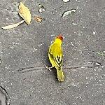 この様な鳥が僕達の近距離を飛んで行きます。