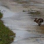 よく見るとウサギが走っていたり