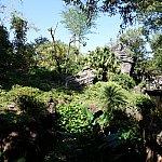 とにかく広大なゴリラの森です!