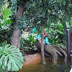 ジャングル探検一週間目。