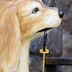可愛らしい犬ですが、上海カリブでは驚きの姿になっています…