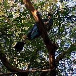 分かり難いですが、大きな鳥が木にとまっています。