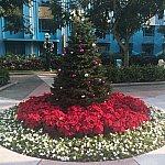 中庭のツリーです。🎄
