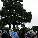 左手に松の木