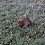部屋へ戻る途中のくさむらに野生のウサギが!!