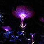クラゲのような花?がぼんやり浮かんでいます