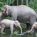 ゾウの水浴び場は可愛い