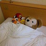 部屋の写真はこれしかありませんでした😓しかも何か寝てるし😥