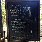 この日はいませんでしたが、普段はコロンバスモンキーと言う猿達が元気に遊んでいます。