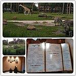 キダニ内のSANAAレストランにて、年パス又はDVCメンバーカード提示で10%のディスカウントを受けられます⭐︎