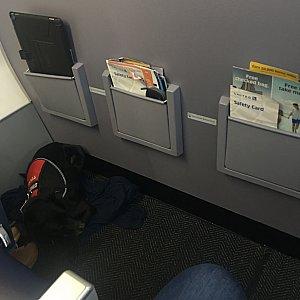 ロサンゼルス行き便に犬連れのパッセンジャーを沢山みかけました。