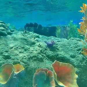 海底2万マイルとは違って本当の水の中を探検します