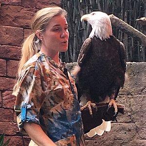 こちらはアメリカの国鳥、ハクトウワシです。神々しい凛とした表情です。アメリカ人は皆大喜び!