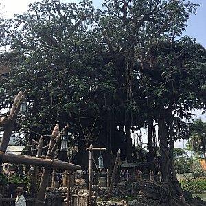 この樹をターザンの家を目指して登って行きます。
