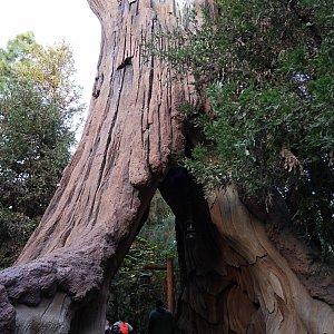 レッドウッドクリークチャレンジトレイルにはウッドチャックにあるような木があったりしてワクワクしました😍