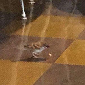 """""""香港名物""""のスズメが店内に飛んで来て食べ物を狙ってくるので注意が必要かも⁉️"""
