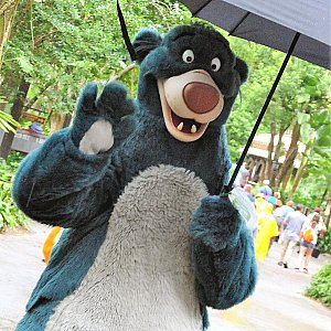 雨が降ると、こんな感じで傘をさして登場します(笑)