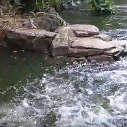 水面をバシャバシャ跳ねるのがピラニアです。