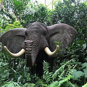 アフリカ象!東京よりも近くで見れるので大きいです!