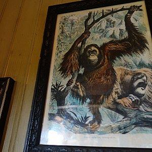 ジャングルにいる動物たちの絵がたくさん飾られてました。人口密度が高く、酸素が薄かった!