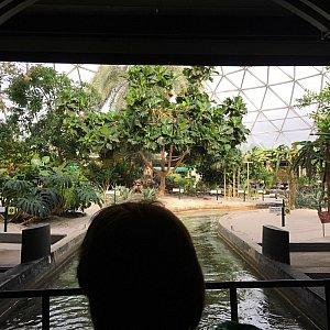 おぉ、口コミで見たことのある温室の風景が広がってきました