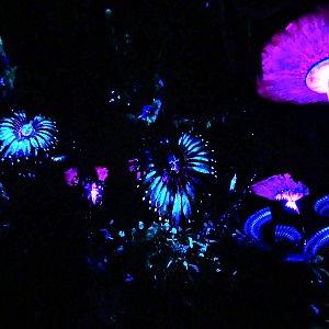 パンドラの世界の不思議な植物を見ることができます。
