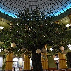 中央にグローブの木