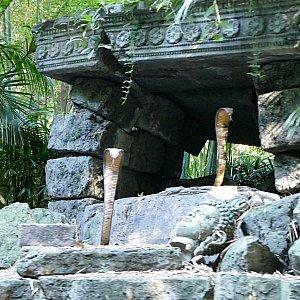 遺跡の前にキングコブラ。東京のように遺跡の中は冒険できません。中が気になる・・・。
