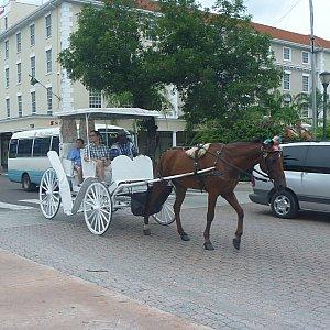 市内は馬に乗って移動できるみたいで、この馬の勧誘がすごかったです・・・