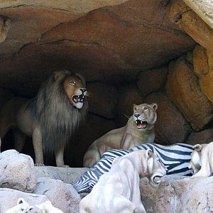 ライオン達。